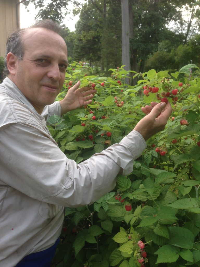 man pointing to berry bush